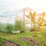 5 Ways A Polycarbonate Greenhouse Can Make Your Home More Sustainable